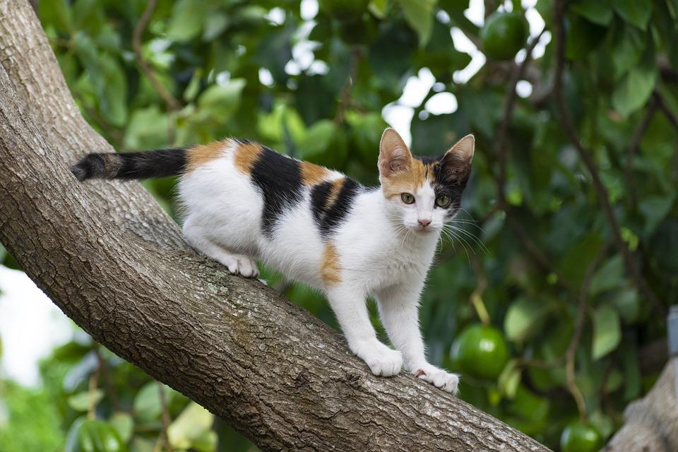 Cat, Animal, Kitten, Pet, Predator, Cute, Feline