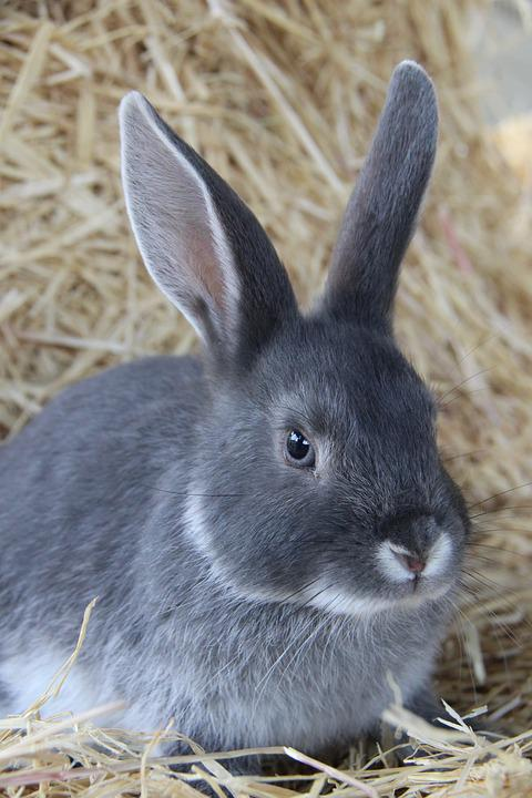free photo cute rabbit bunny nature animal max pixel