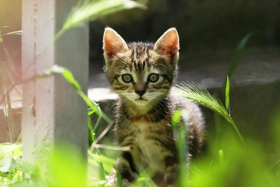 Cat, Kitty, Cute, Little, Small, Animal, Feline