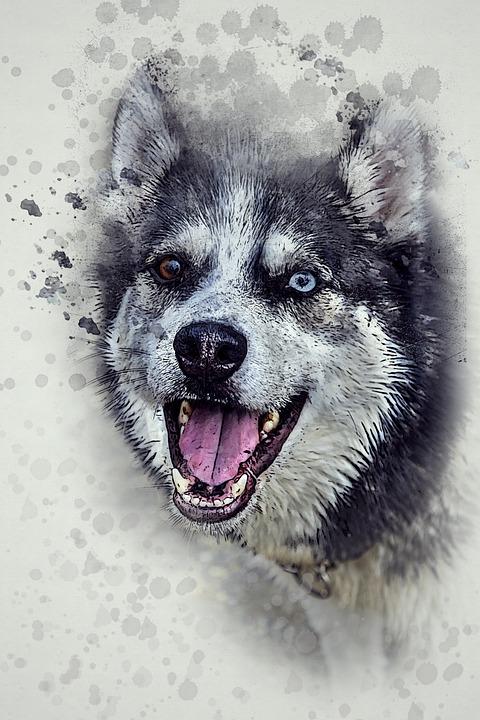 Dog, Husky, Happy, Pet, Animal, Cute, White, Happiness