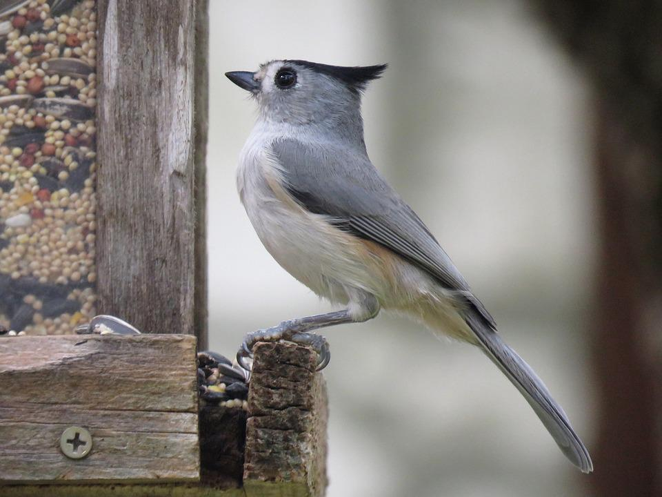 Bird, Cute, Wildlife