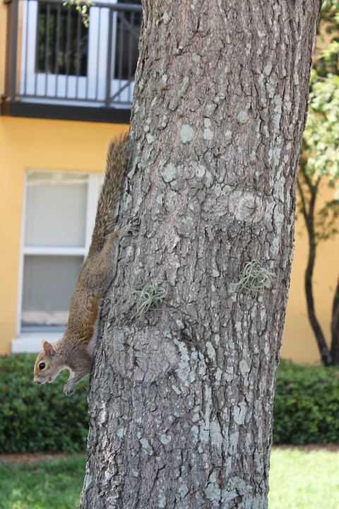 Squirrel, Animal, Tree, Nature, Wildlife, Cute, Rodent