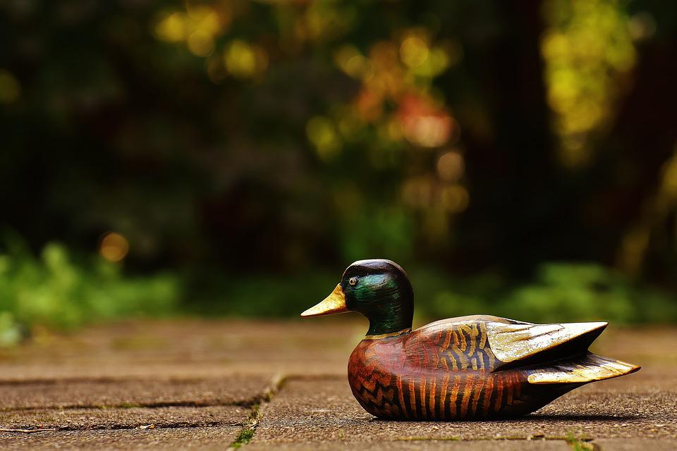 Duck, Deco, Fig, Cute, Sweet, Wood, Animal, Colorful