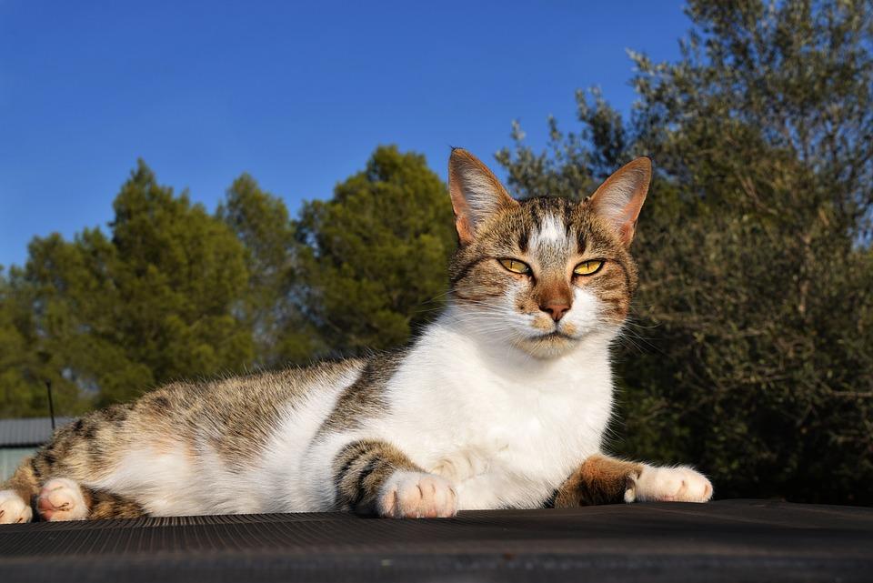 Cat, Animal, Cute, Nature, Mammal, Young, Fur, Outdoors