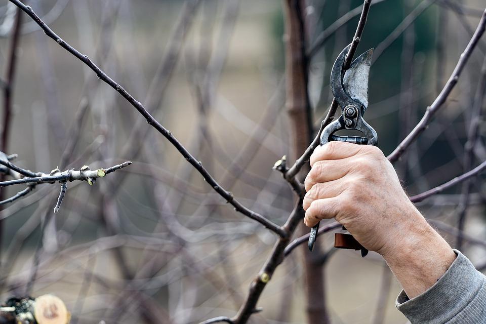 Cutting, Scissors, Tree, Tool, Work, Blade, Registrar