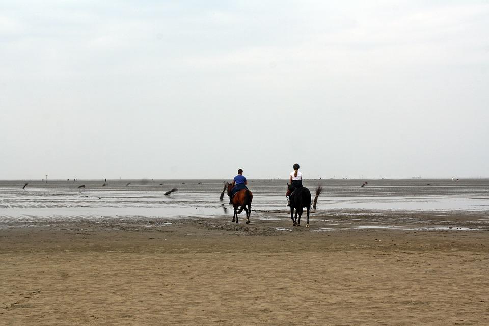 North Sea, Wadden Sea, Ride, Ebb, Cuxhaven