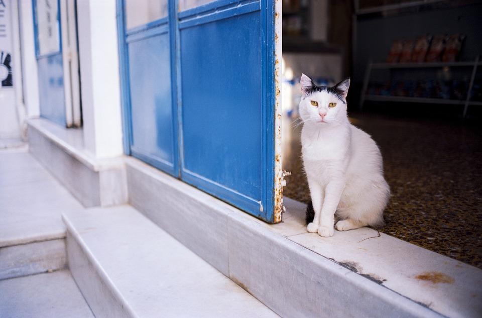 Cat, Travel, Greece, Ios, Cyclades, Mediterranean
