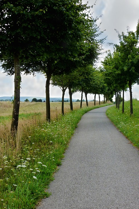 Cycle Path, Trees, Landscape, Nature, Trail, Idyllic