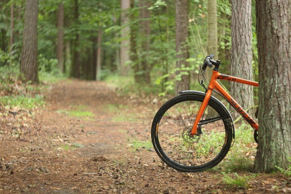 Bike, Forest, Cycling, Landscape, Nature, Park