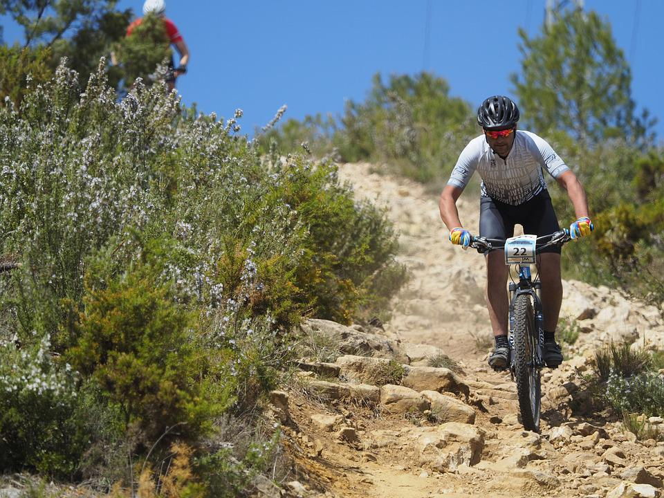 Cycling, Mountain Biking, Nature, Adventures, Tree