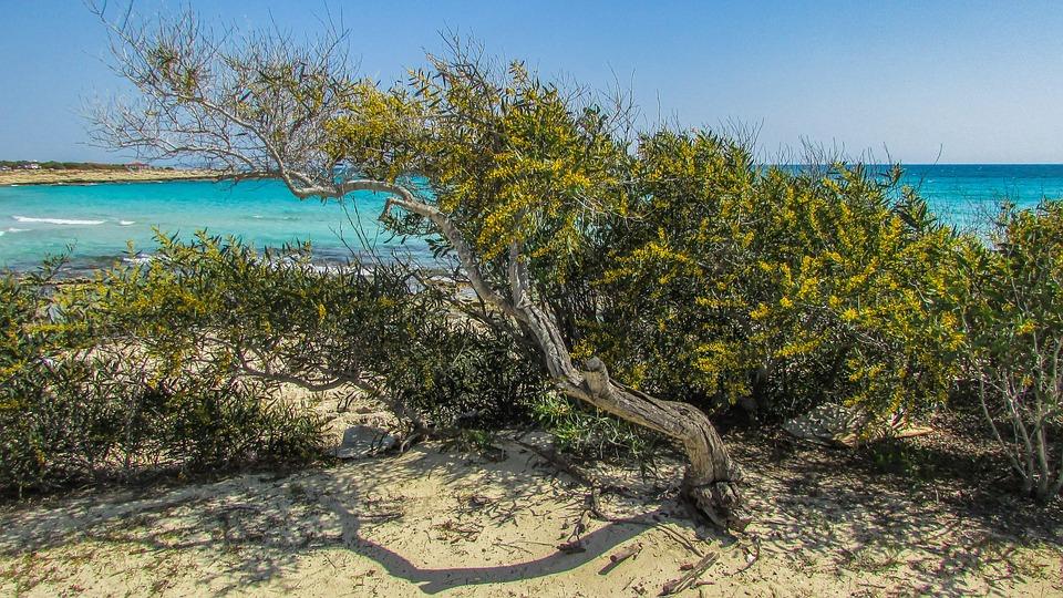 Cyprus, Ayia Napa, Lanta Beach, Tree, Sand, Beach