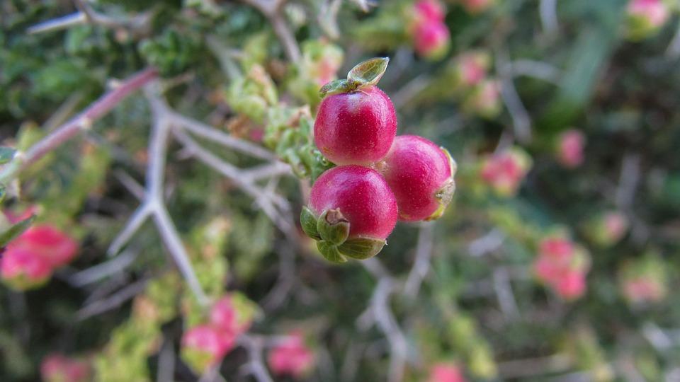 Cyprus, Cavo Greko, National Park, Flower, Flora