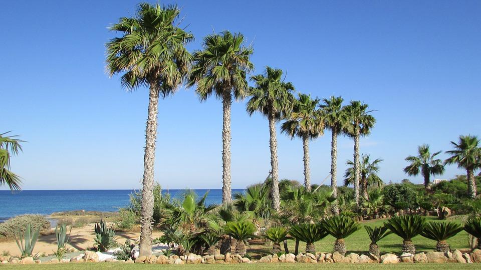 Palm, Tree, Sea, Sky, Green, Nature, Cyprus