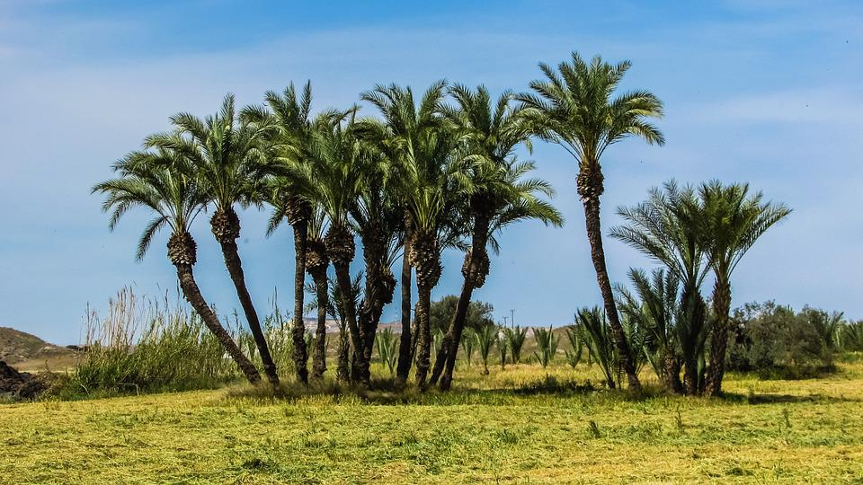 Cyprus, Troulli, Palms, Trees, Group, Landscape