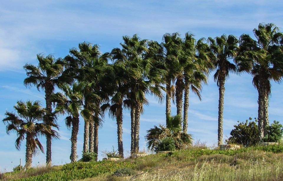 Palm Trees, Garden, Hotel, Resort, Cyprus