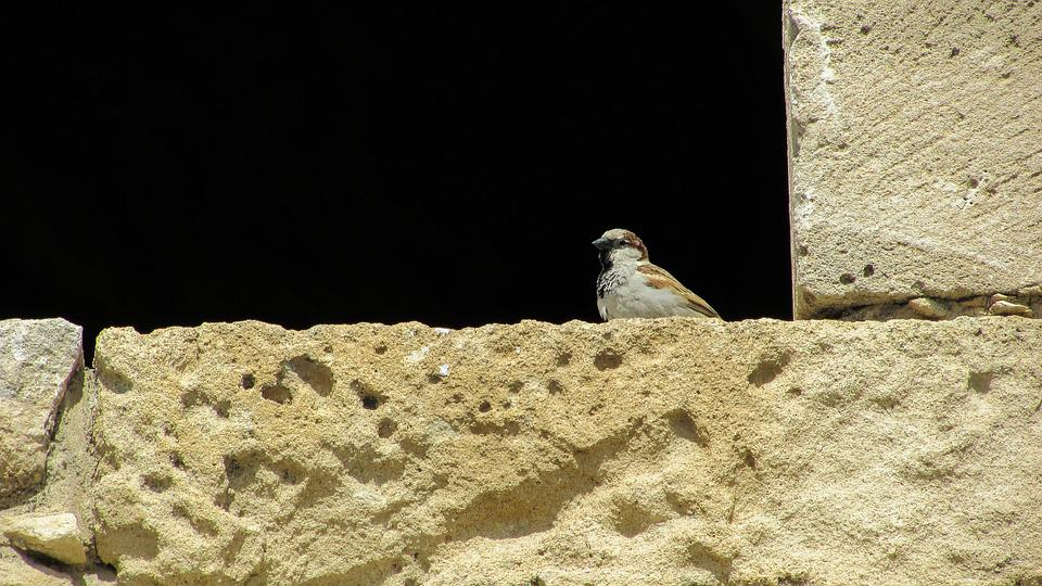 Cyprus, Castle, Window, Sparrow, Looking