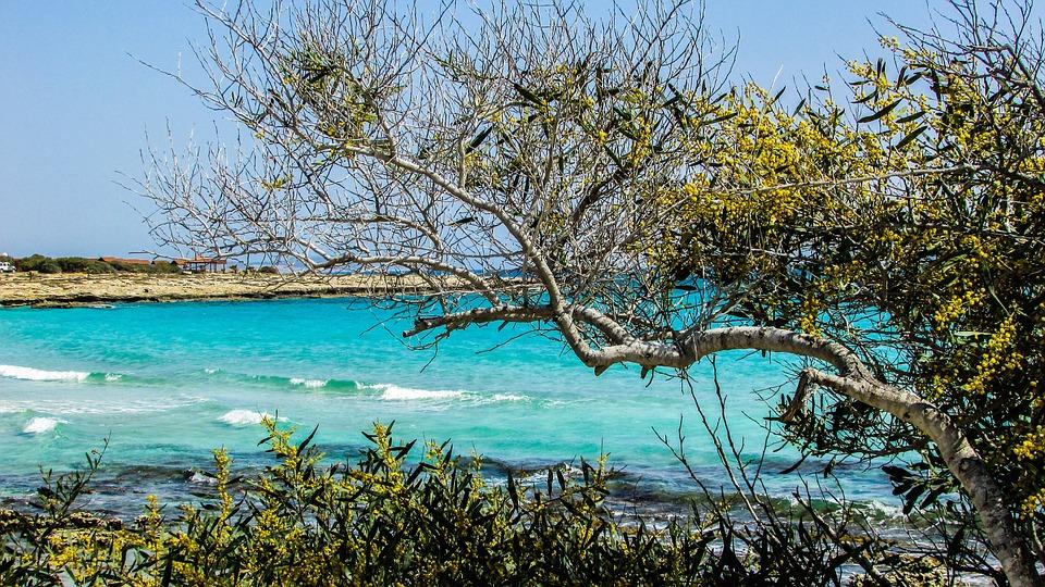 Cyprus, Ayia Napa, Lanta Beach, Tree, Sea