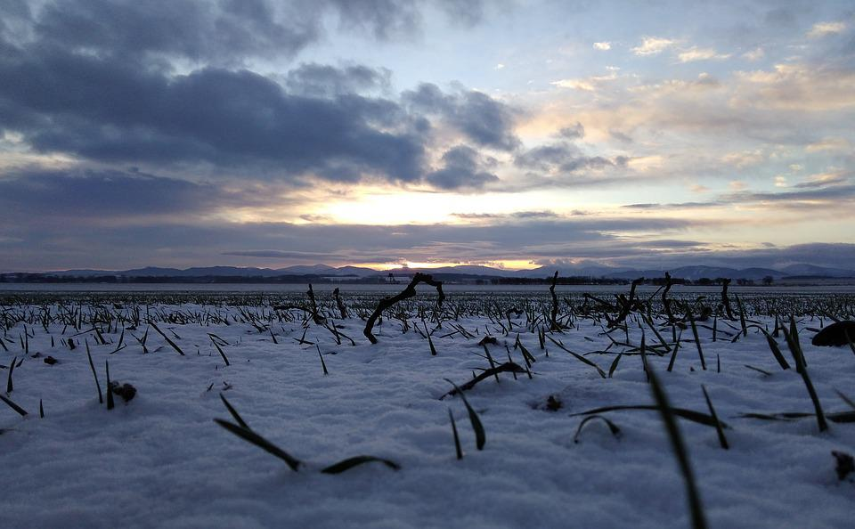 White, Blue, Heaven, Landscape, Czech Republic, Grass