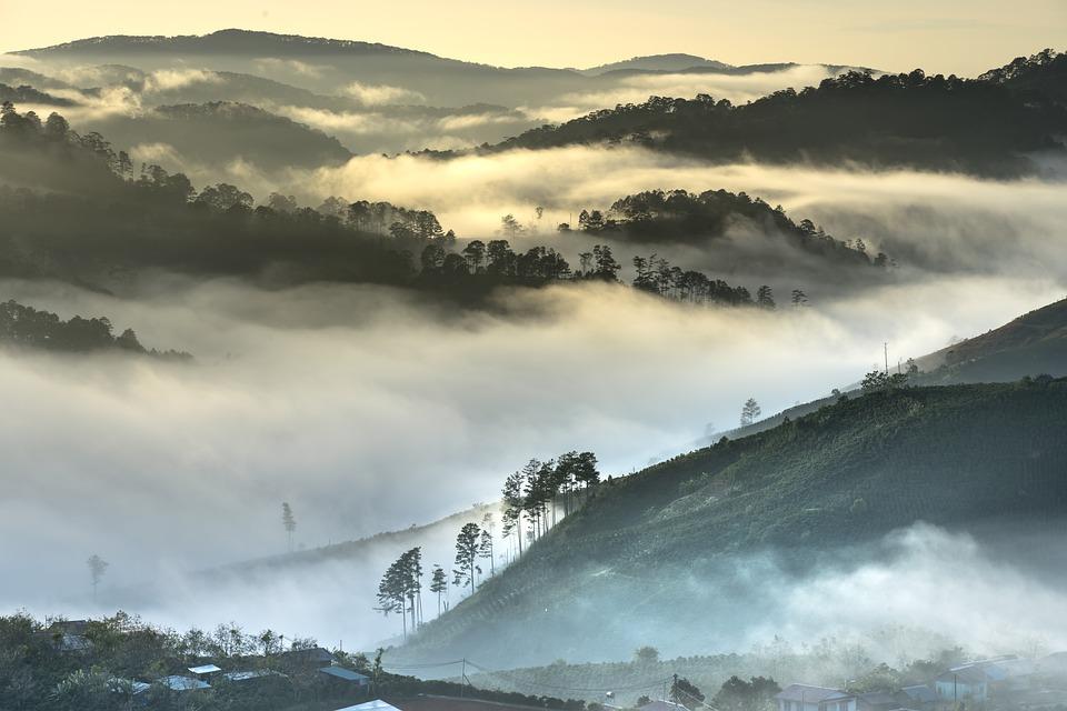 Da Lat, Vietnam, Planting, Bright, The Hill, Theung