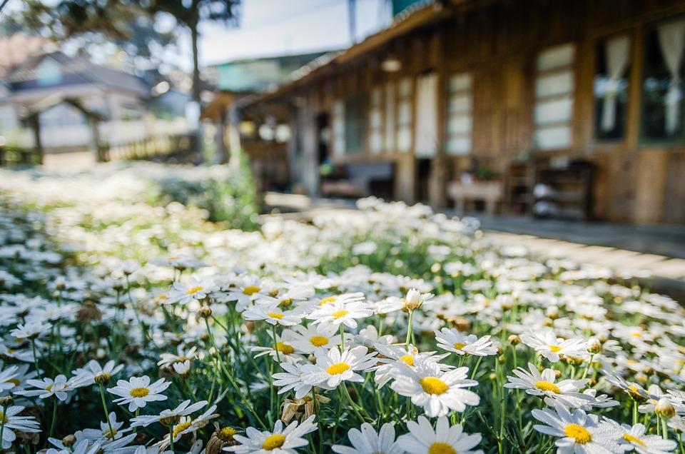 Flowers, Travel, Nature, Da Lat