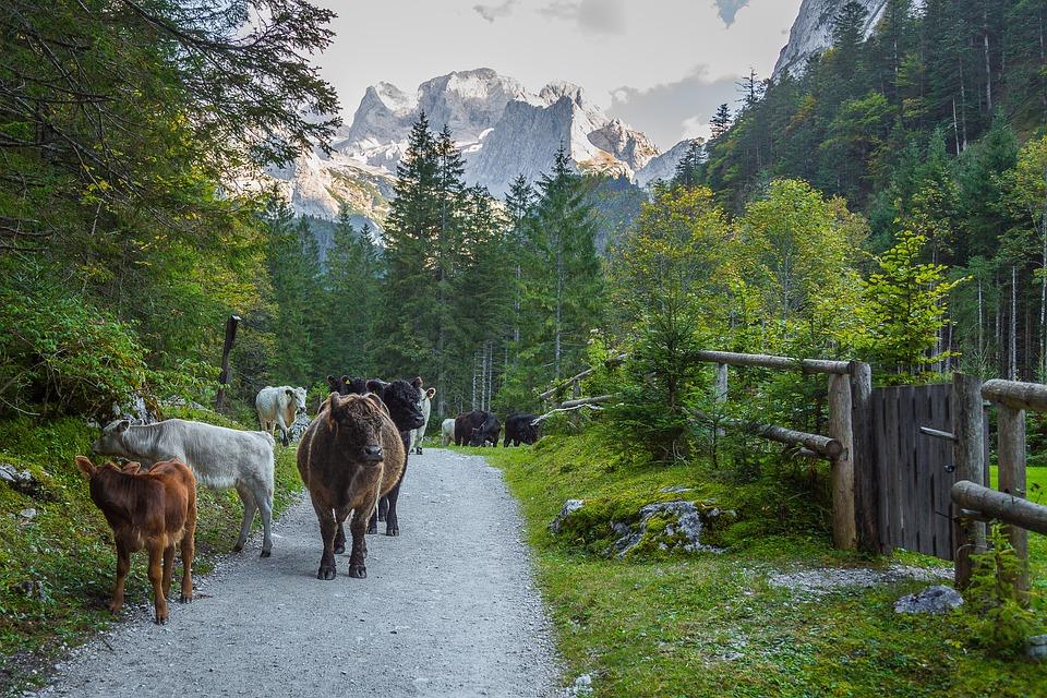 Alpine, Mountains, Alpine Panorama, Dachstein