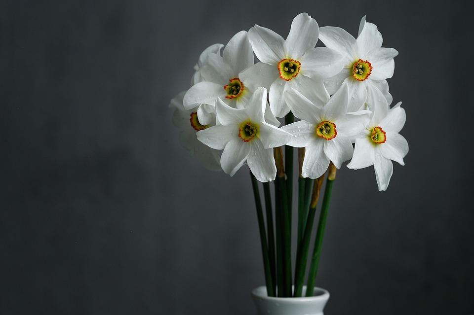 Daffodils, White Flowers, Floral Arrangement