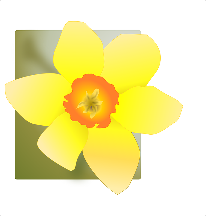 Daffodils, Yellow, Flowers, Square Frame