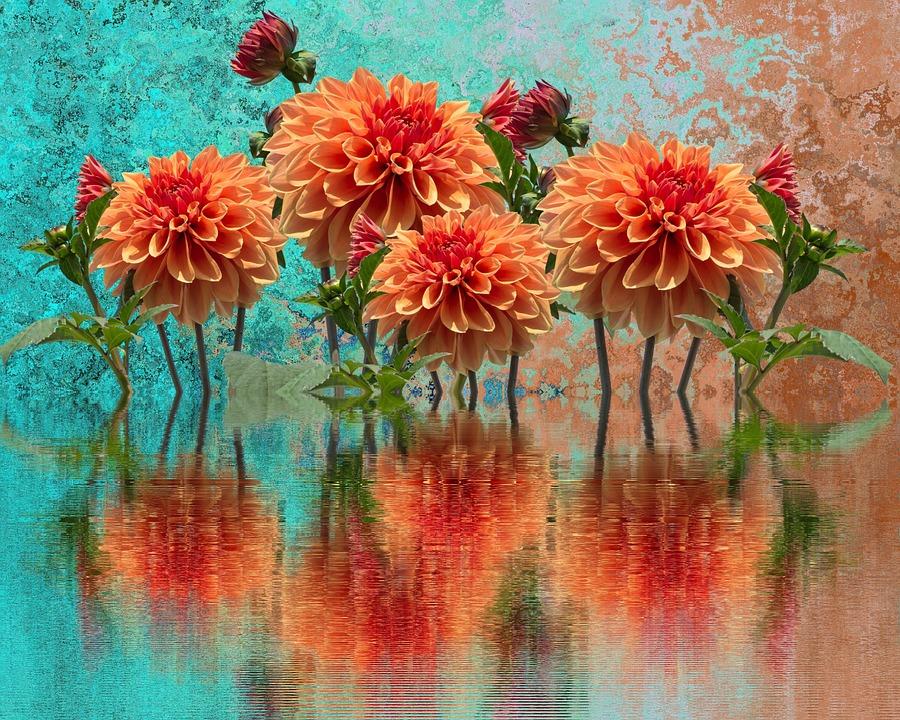 Dahlias, Autumn, Dahlia, Dahlia Garden, Blossom, Bloom
