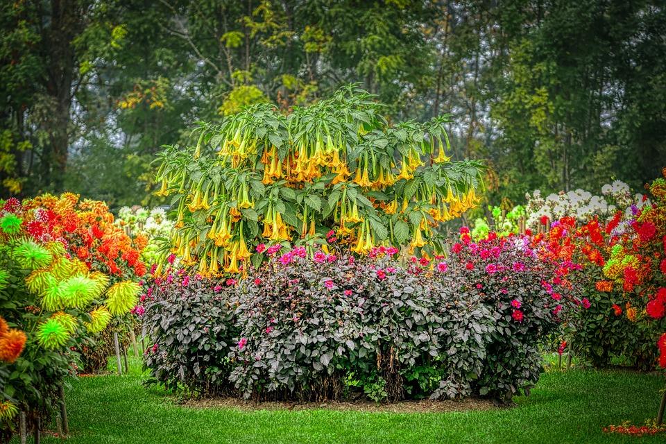 Flowers, Park, Garden, Nature, Dahlias, Bluebells