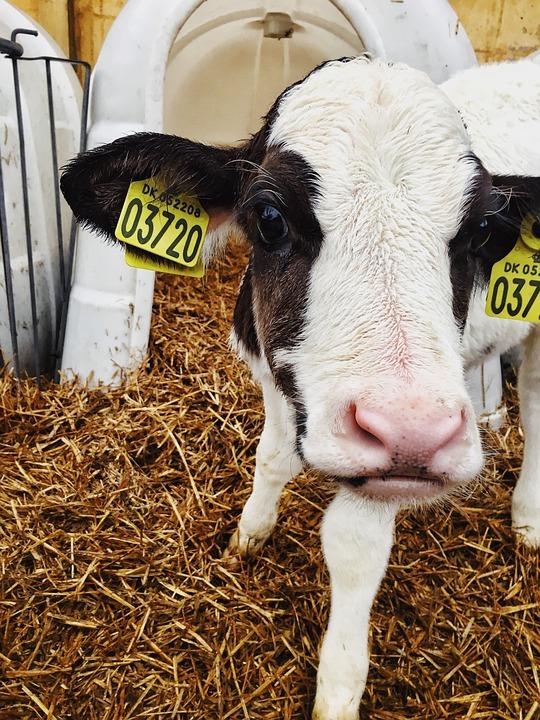 Farm, Agriculture, Milk, Livestock, Mammal, Dairy