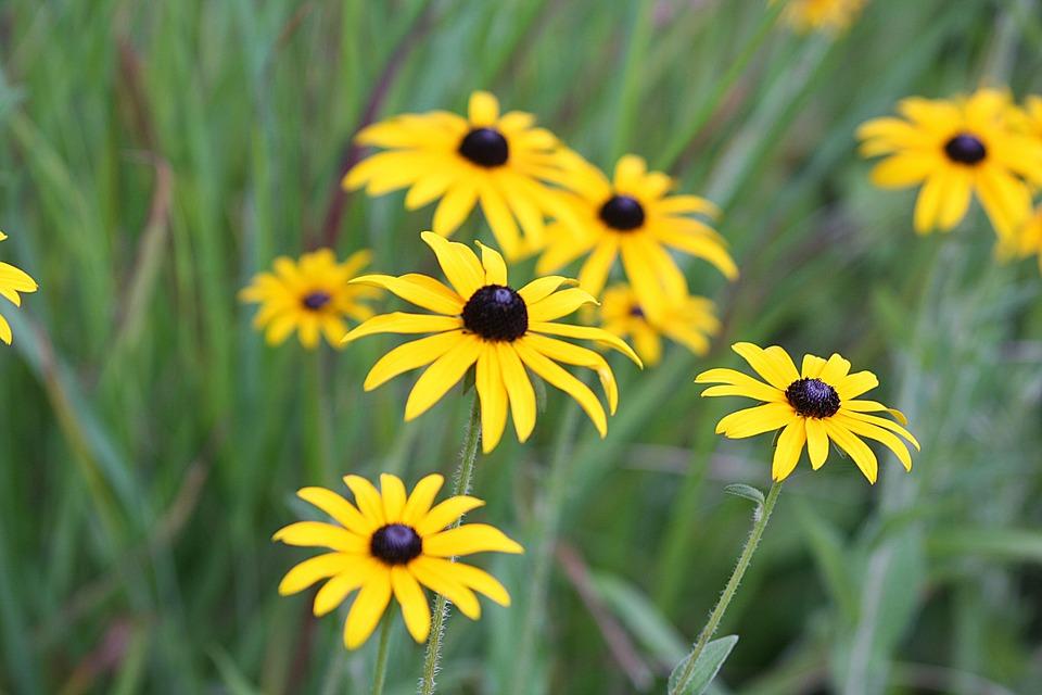 Flowers, Daisies, Walk In The Park, Flower Carpet