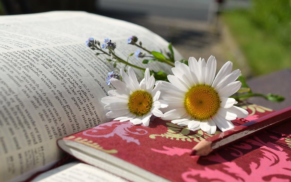 Daisies, Book, Read, Writing Materials, Notes, Bible