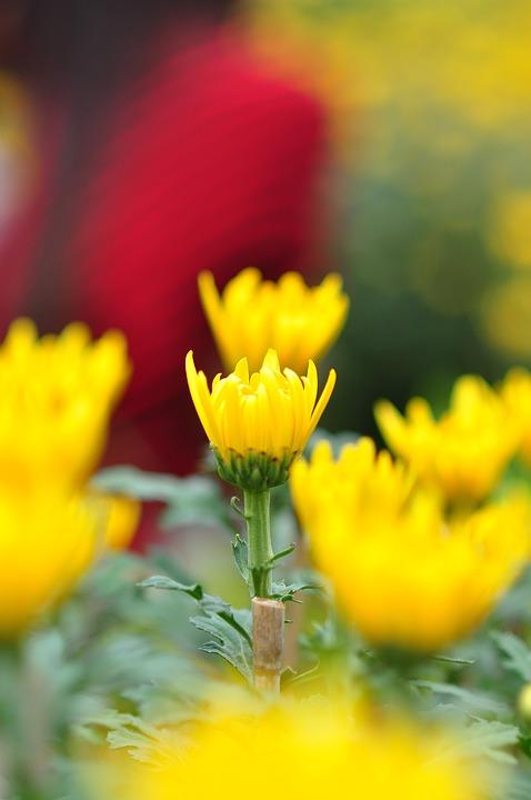 Daisy, Floral, Green, Artistic, Blossom, Bright, Close