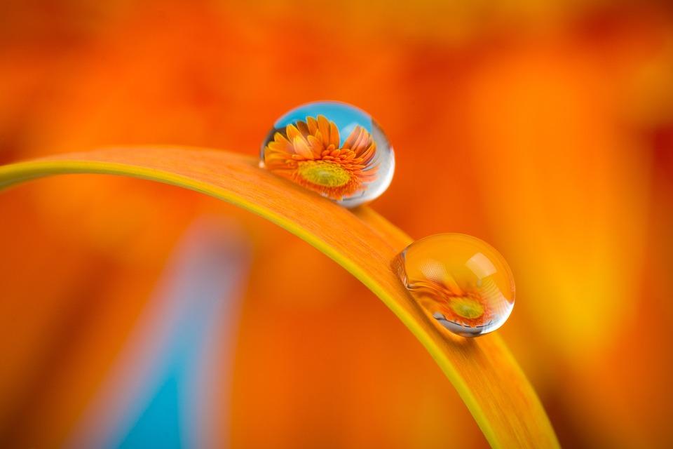 Flower, Macro, Water, Nature, Daisy, Color, Orange