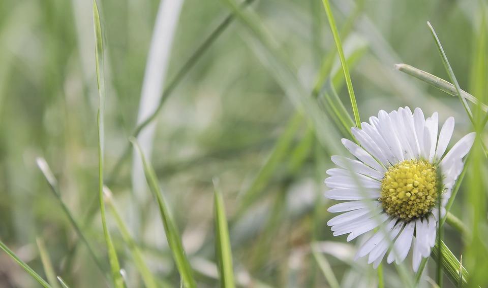 Garden, Flower, Summer, Daisy