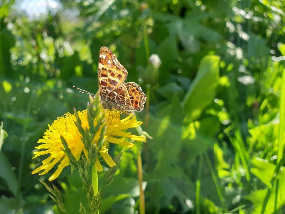 Butterfly, Flowers, Daisy