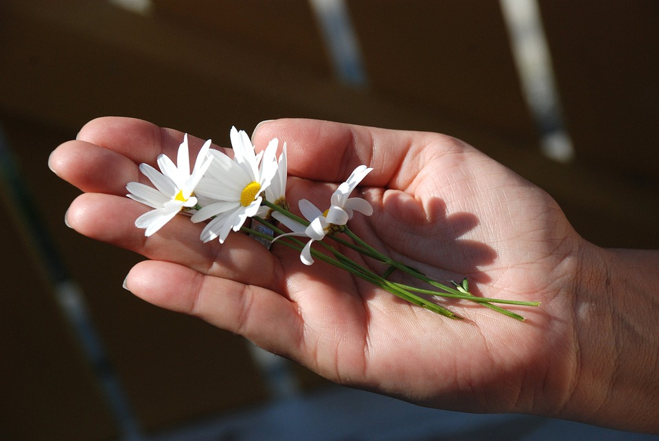 Flowers, Daisy, White, Yellow, Stalk, Long, Palm, Hand