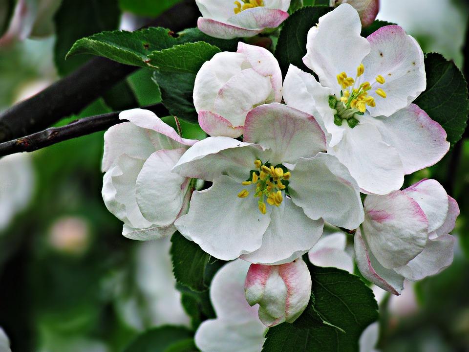 Flower, Flowers, Spring, Tree, Garden, Daisy