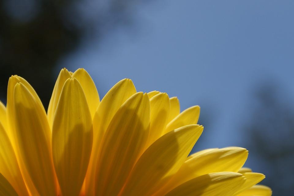 Daisy, Gerbera, Daisies, Flower, Spring, Plant, Bloom