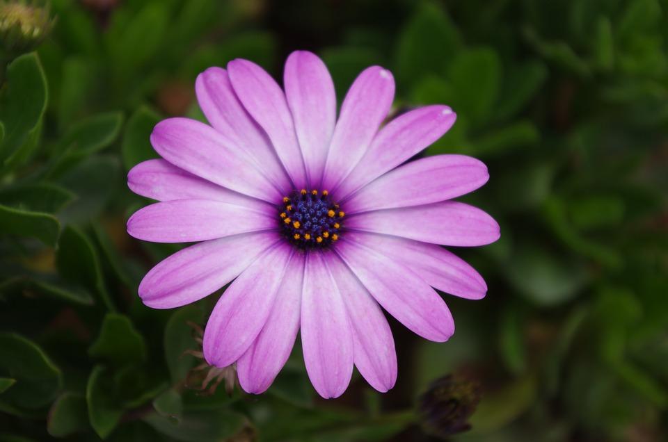 Plant, Flower, Gerbera, Daisy