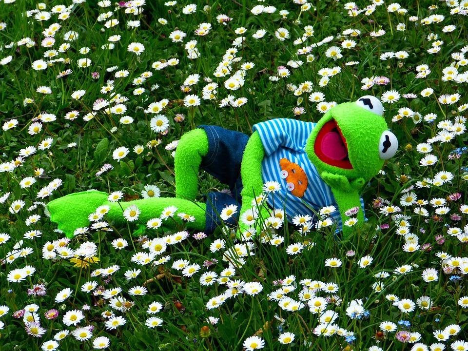 Kermit, Frog, Meadow, Daisy, Concerns, Relax, Rest, Fun