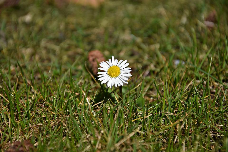 Nature, Grass, Plant, Summer, Meadow, Daisy