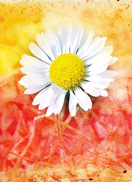 Daisy, Flower, Blossom, Bloom, White, Painting