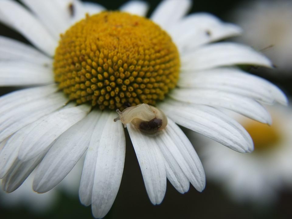 Daisy, Snail, Dancing