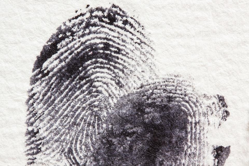 Fingerprint, Daktylogramm, Papillary, Fingertip