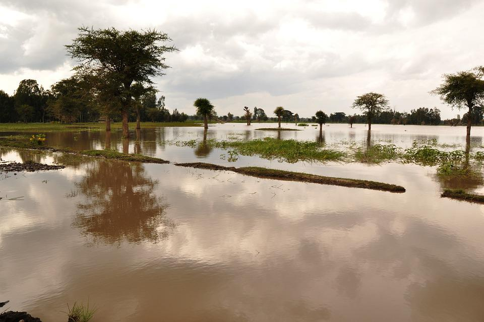 Flood, Flooding, Wet, Water, Damage, Disaster, Weather