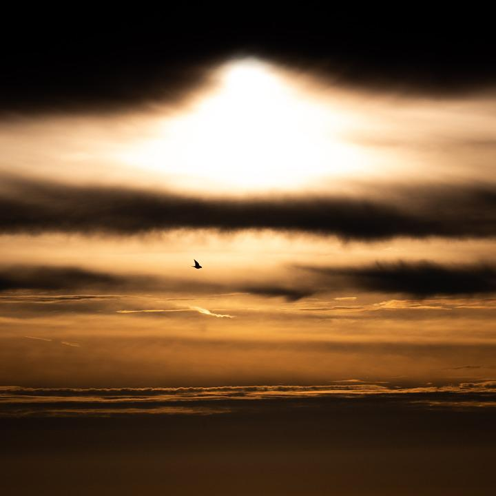 Sunrise, Explosion, Sun, Sunset, Clouds, Dark, Bird