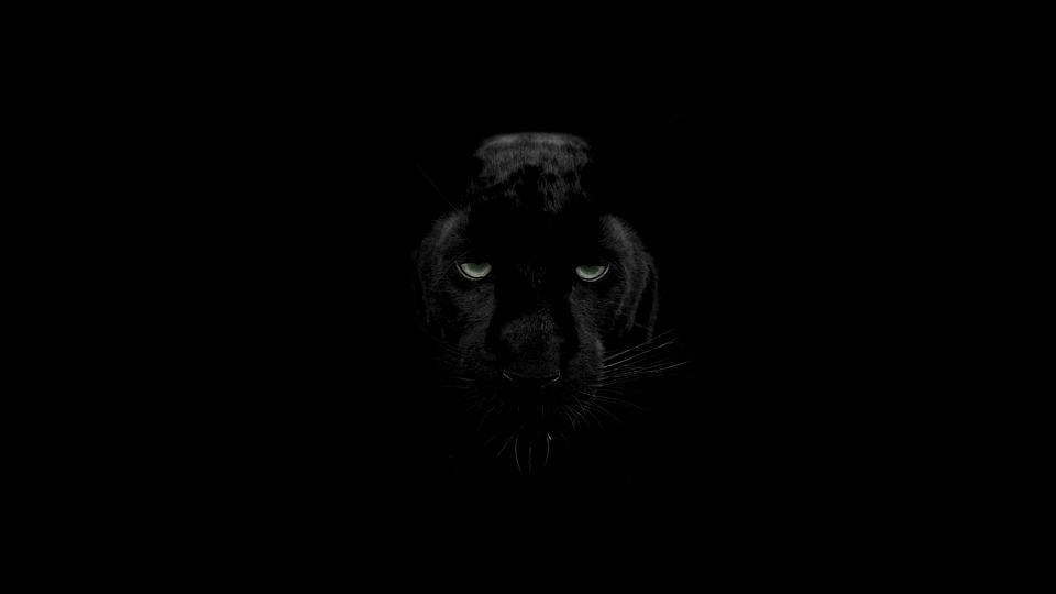 Monochrome, Dark, Wildlife, Nature, Animals, Eye