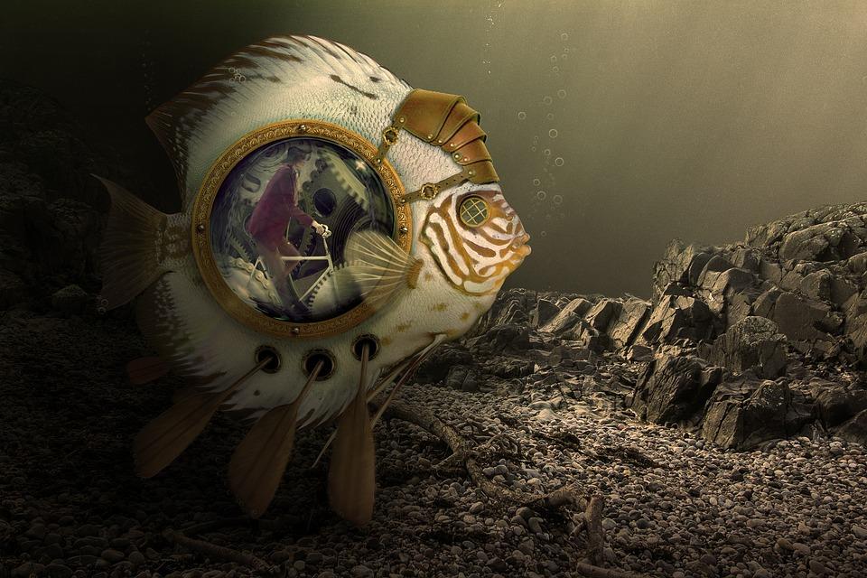 Nature, Fish, Dark, Paddle, Bike, The Mechanism Of