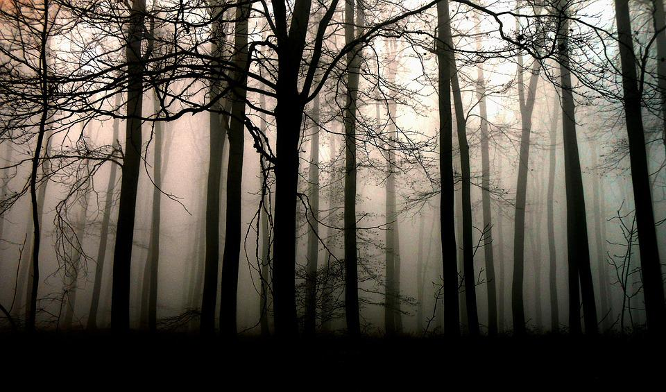 Forest, Dark, Trees, Fog